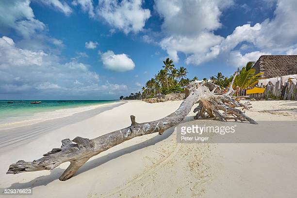 Washed-up tree trunk sits on beach beside resorts
