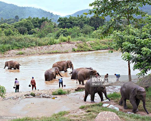 Washing elephants