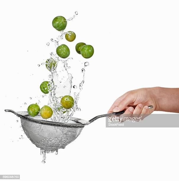 Washing mirabelles in a colander