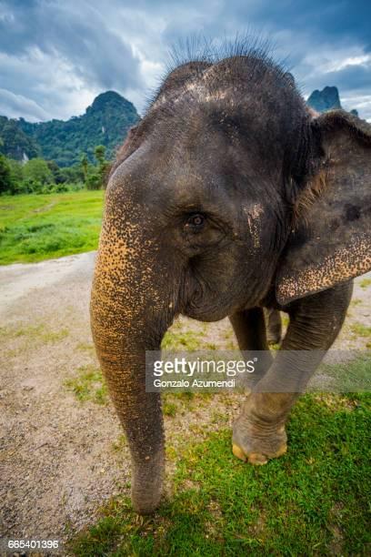 Washing the elephants at  Khao Sok National Park