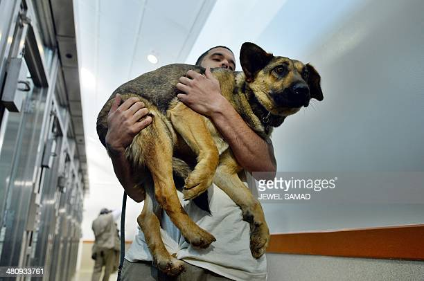 Washington Animal Rescue League Shift Supervisor Miles Gray carries a stray dog rescued from Sochi Russia to its 'den' at the league's shelter in...