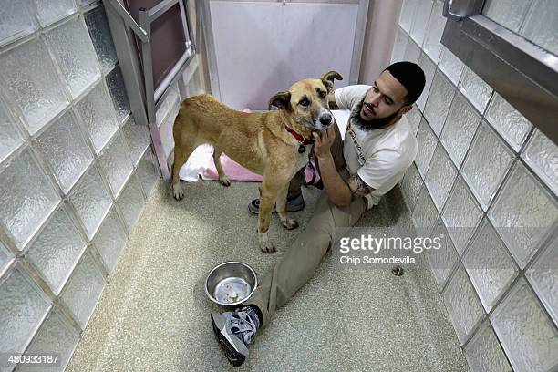 Washington Animal Rescue League Shift Supervisor Miles Gray pets a stray dog from Sochi Russia inside its 'doggie den' at the league's shelter March...