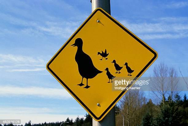 USA Washington Bellevue Duck Crossing Sign