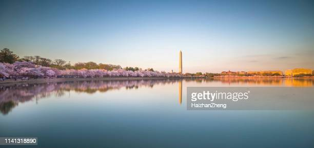 washington dc in spring - washington dc stock pictures, royalty-free photos & images