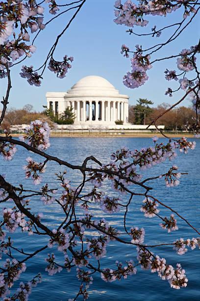 Washington DC: Jefferson Memorial  Cherry festival