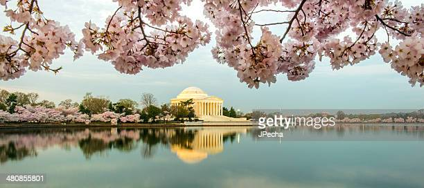 Washington DC Tidal Basin Sunrise with Cherry Blossoms