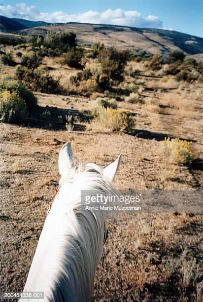 usa, washington, ellensburg, horse with sagebrush in background - artemisia stock pictures, royalty-free photos & images