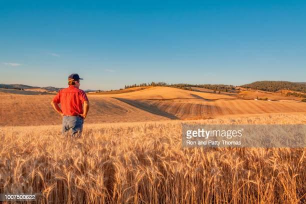 washington farmer looks at wheat vista (p) - spokane stock pictures, royalty-free photos & images