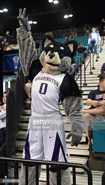 Washington Huskies mascot Harry the Husky poses during the team's firstround game of the Pac12 Basketball Tournament against the Stanford Cardinal at...