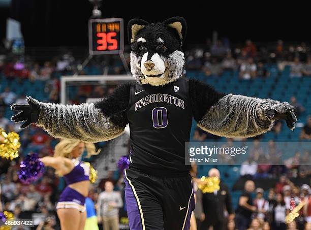 Washington Huskies mascot Harry the Husky stands on the court during a firstround game of the Pac12 Basketball Tournament against the Stanford...