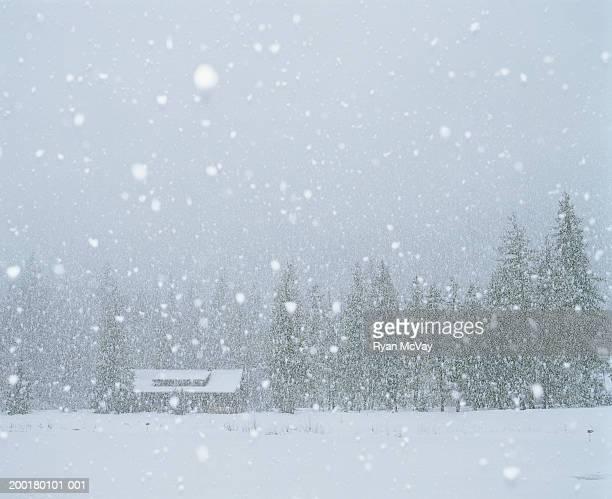 usa, washington, mazama, snow falling on cabin, winter - 雪が降る ストックフォトと画像