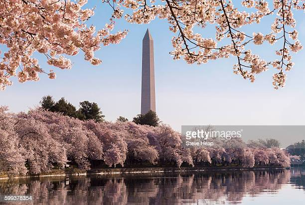 Washington Monument, Washington DC, USA during Cherry Blossom Festival