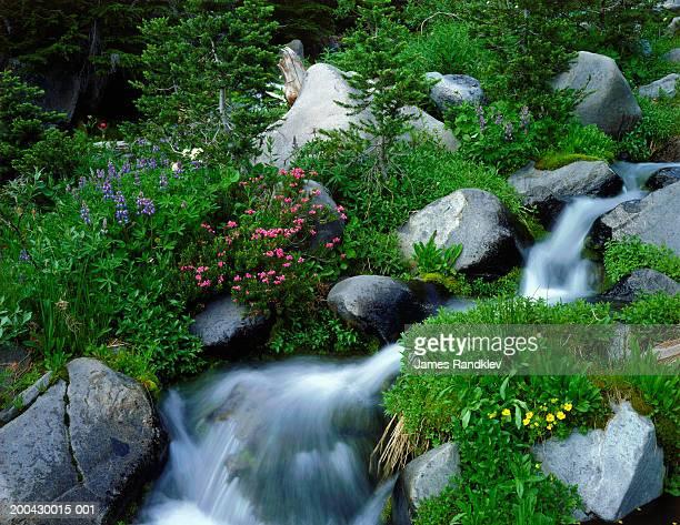 usa, washington, mt. rainier national park, paradise meadow - heather brooke ストックフォトと画像
