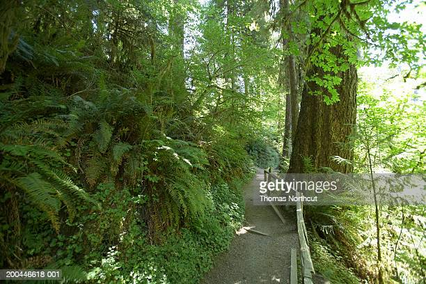 usa, washington, olympic national park, footpath in hoh rainforest - foresta temperata foto e immagini stock