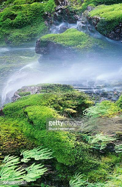 USA, Washington, Olympic NP, small waterfall with moss and ferns
