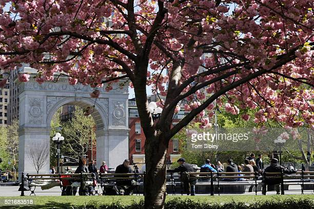washington square park - washington square park stock pictures, royalty-free photos & images