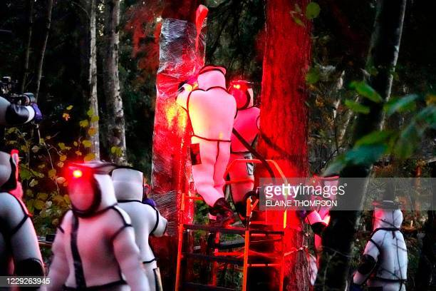 Washington State Department of Agriculture workers, wearing protective suits and working in pre-dawn darkness illuminated with red lamps, vacuum a...