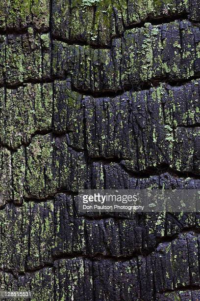 usa, washington state, kitsap county, hansville, burnt cedar stump - kitsap county washington state stock pictures, royalty-free photos & images