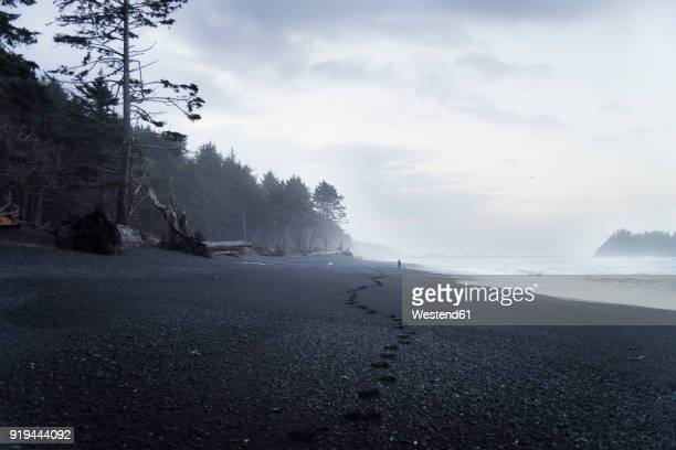 usa, washington state, olympic national park, seastack at rialto beach - rialto beach stock photos and pictures