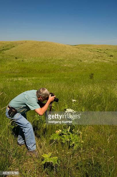 USA Washington State Palouse Country Prairie Near Steptoe Butte Man Photographing Cow Parsnip