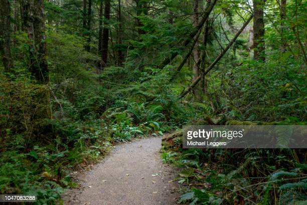 washington state - state stock pictures, royalty-free photos & images