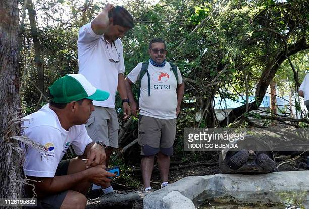 Washington Tapia member of Galapagos Conservancy and two park rangers are pictured with a specimen of the giant Galapagos tortoise Chelonoidis...