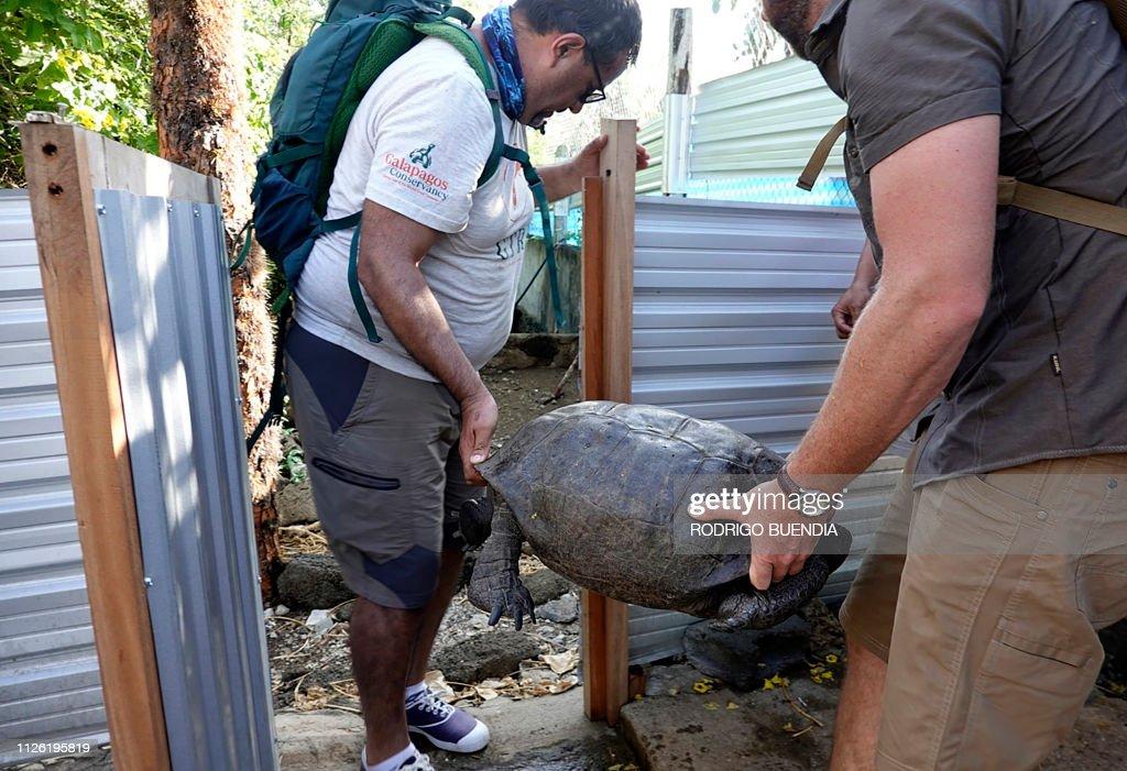 ECUADOR-GALAPAGOS-TORTOISE-DISCOVERY : News Photo