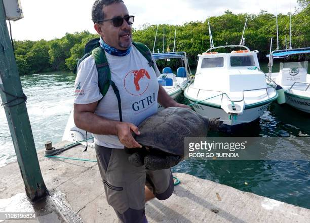 Washington Tapia member of Galapagos Conservancy transports a specimen of the giant Galapagos tortoise Chelonoidis phantasticus thought to have gone...