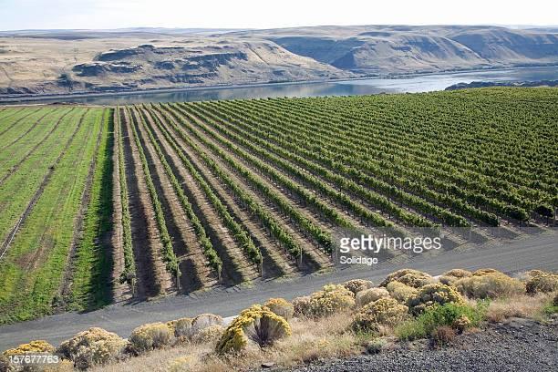 washington vineyards and columbia river gorge - washington state stock pictures, royalty-free photos & images
