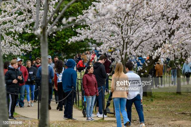 Washingtonians and tourists walk around the tidal basin to see this years Cherry Blossom's despite the outbreak of Coronavirus, COVID-19, and the...