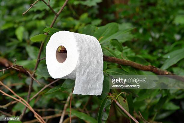 washroom in the woods - toilet paper tree stock pictures, royalty-free photos & images