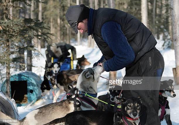 Twotime Iditarod Champion Norwegian Robert Sorlie's dog handler Frenchman Beniot Gerard prepares to exercise Sorlie's dog through a practice trail in...