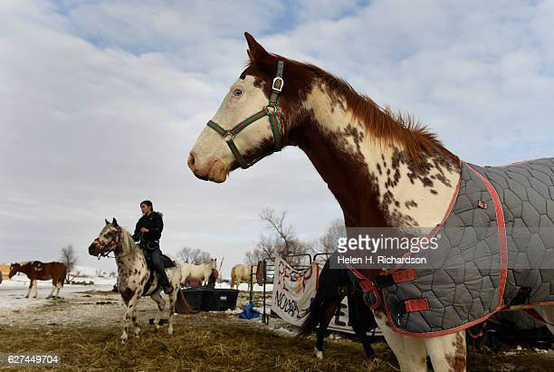 Waskoness Pitawanakwat of the Ojibe tribe, middle in back, heads out for a ride on her horse Sun Cloud at Oceti Sakowin Camp on the edge of the...