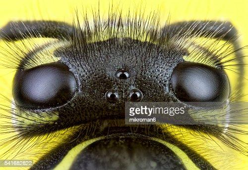 Wasp close-up