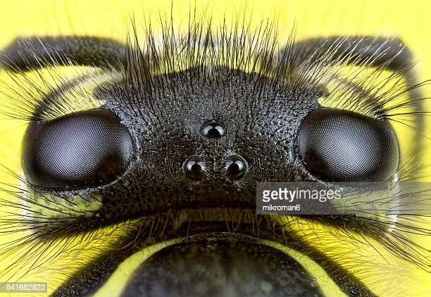 Wasp close-up