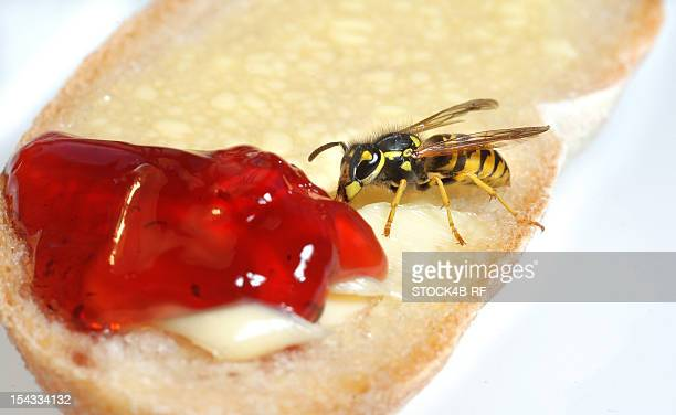 Wasp eating from roll with jam