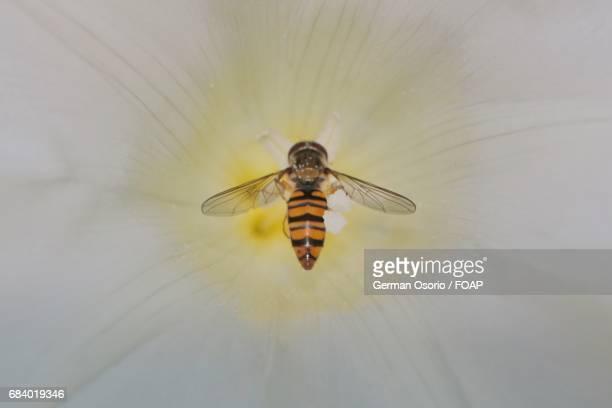 Wasp feeding on flower