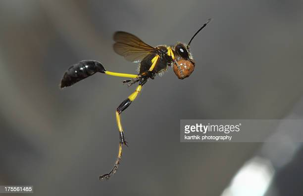 Wasp in action