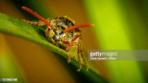wasp mugshot - african wasp stock pictures, royalty-free photos & images