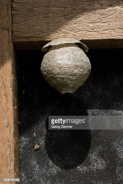 wasp nest in a barn - nido di vespe foto e immagini stock