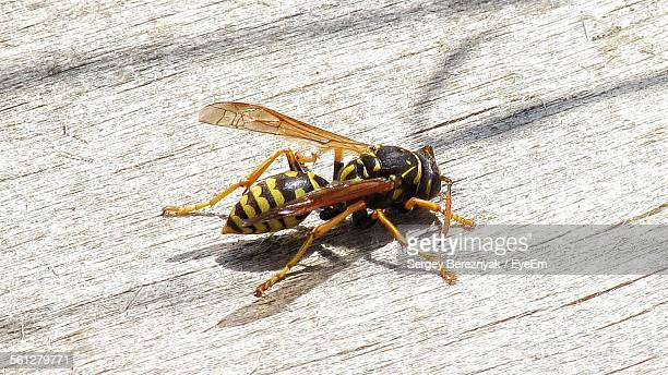 wasp on wooden surface - paper wasp stock pictures, royalty-free photos & images