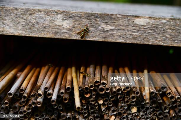 Wasps attacking a hotel for bees in the countryside