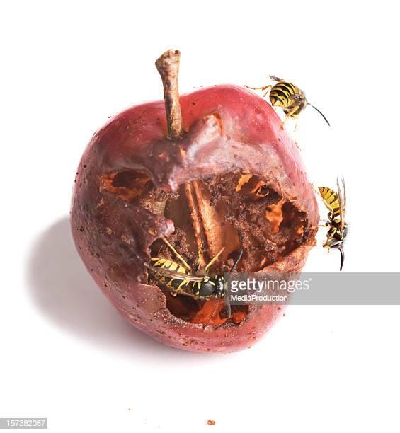 wasps Essen plum