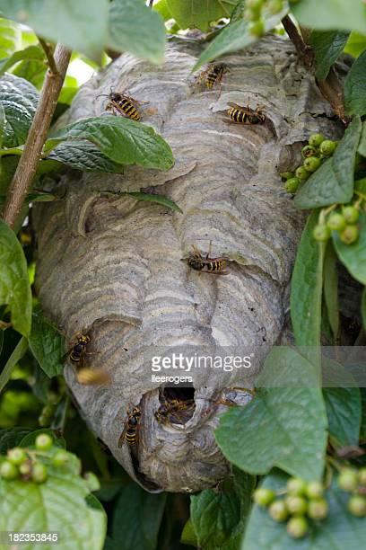 nido di vespe tra le foglie giardino - nido di vespe foto e immagini stock