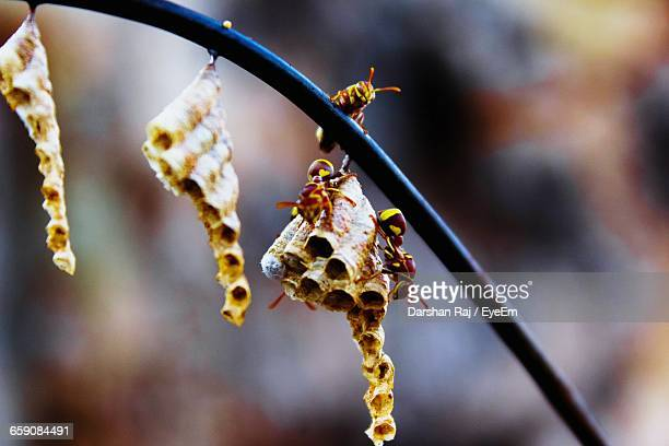 Wasps On Hive