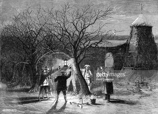 Wassailing apple trees with hot cider in Devonshire on twelfth eve 1861 A print from The Illustrated London News