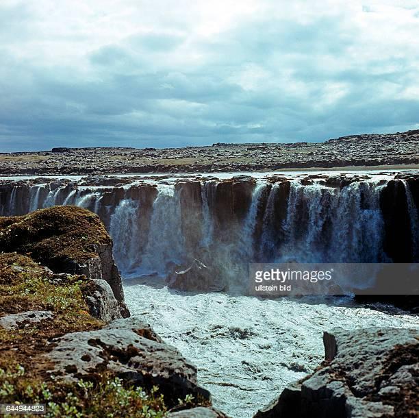 Wasserfall Selfoss einer der spektakulaeren Katarakte des aktiven Gletscherflusses Joekulsa a Fjoellum in Nordisland eine unberuehrte subarktische...