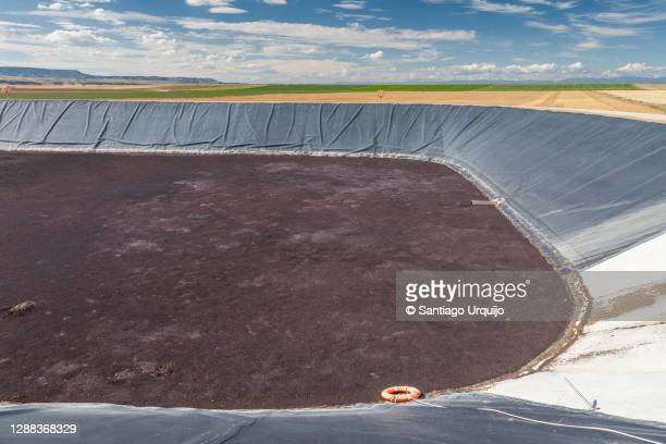 waste pond to store pig manure - pig in shit stock pictures, royalty-free photos & images