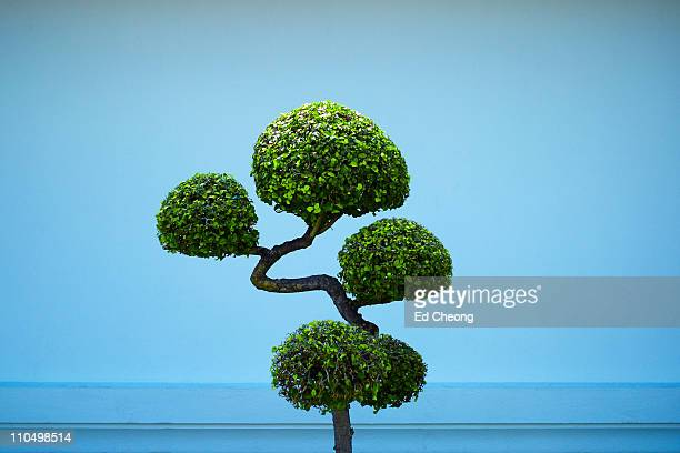 wat po bonsai - bonsai tree stock pictures, royalty-free photos & images