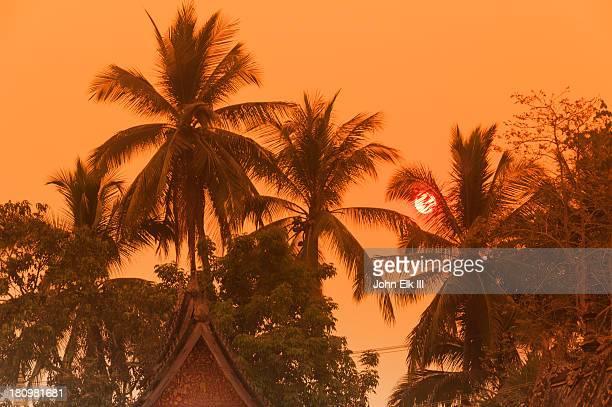 Wat Xieng Thong, sunset through palm trees